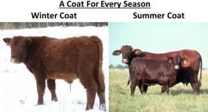 SummerVsWinterCoat
